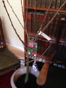 Christina Tappers Retirement Gift A Cherry Tree From The Partners Of Adams Harrison